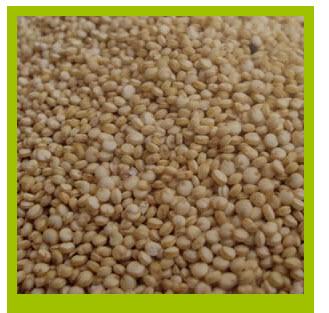 Comprar Quinua Nombre científico : Chenopodium Quinoa