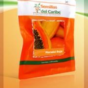 Comprar Semillas Hibridas de Papaya