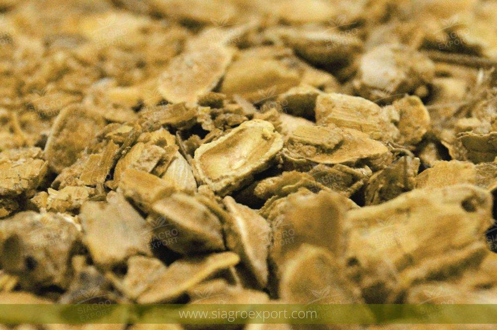 Comprar Algarrobo (prosopis Pallida)