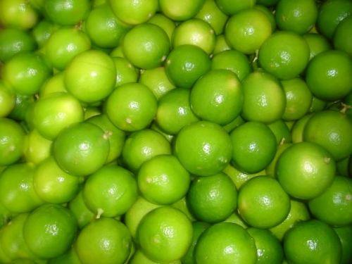 Comprar Limones, venta y distribucion