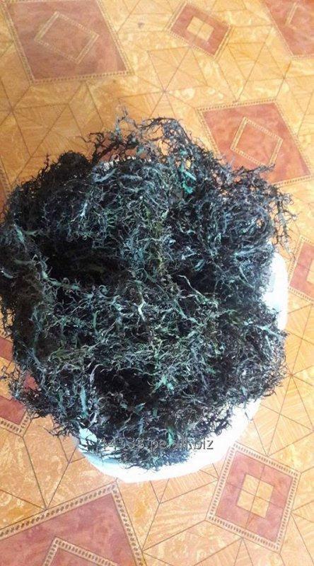 Comprar Algas chondracanthus chamissoi