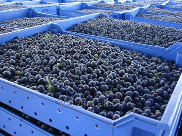 DRIED BLUEBERRIES / FRESH BLUEBERRIES