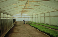 Polyethylene films for greenhouses