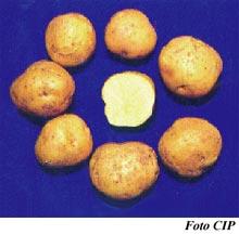 Patatas Costanera