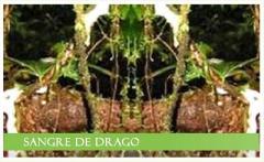 Extracto seco atomizado Croton Lechleri L