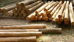 Houses made of logs