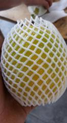 MARACUYA (Passiflora edulis)