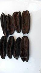 Sea cucumber pattallus mollis