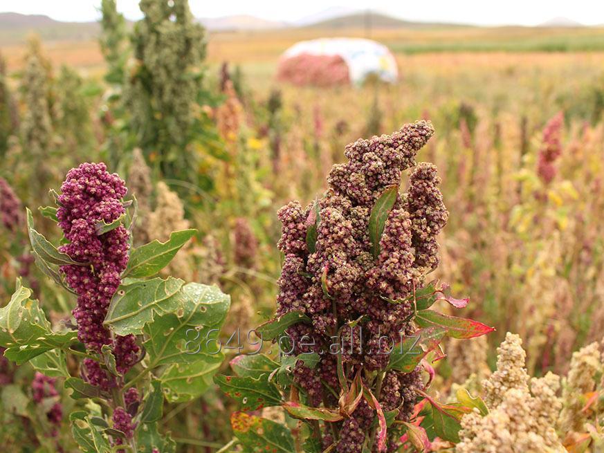 organic_white_quinoa