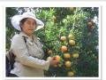 Comercialización de productos agrícolas  de la selva ,cacao,bellaco,cafe,carambola cocona,naranjas ,murcot,platanos de isla, tangelos tangerina.