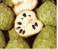 Pulpa De Chirimoya Congelada En Bloques