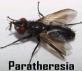 Controladores Biológicos Bio Paratheresia