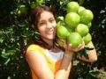 Naranja Valencia (juanjui)