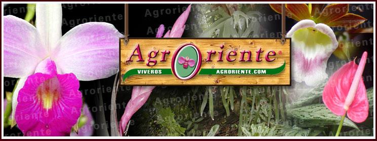Agro Oriente Viveros, S.A.C., Moyobamba