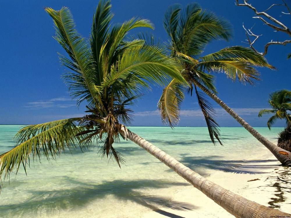 Pedido Confirmado Punta Cana con LAN salida todo el año