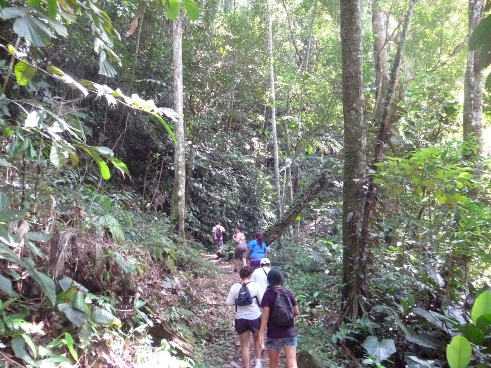 Pedido Reconocimiento de nuestra Selva