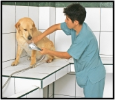 Grooming of dogs and cats