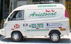 Transporting animals