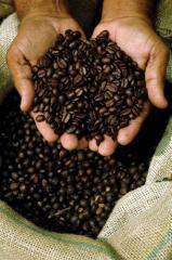 Procesamiento de cafe