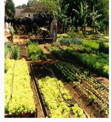 Venta de fertilizantes naturales.