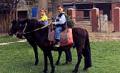 Servicio de paseo en Pony